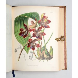 A Century of Orchidaceous Plants selected from Curtis's Botanical Magazine.