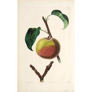 The Autumn Bergamot Pear.