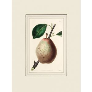 The Beurre Diel Pear.