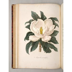 Flora Italiana.