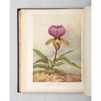 The Orchid Album,