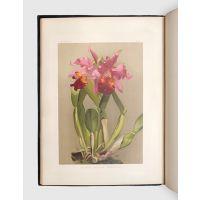 Reichenbachia, Orchids illustrated and described.
